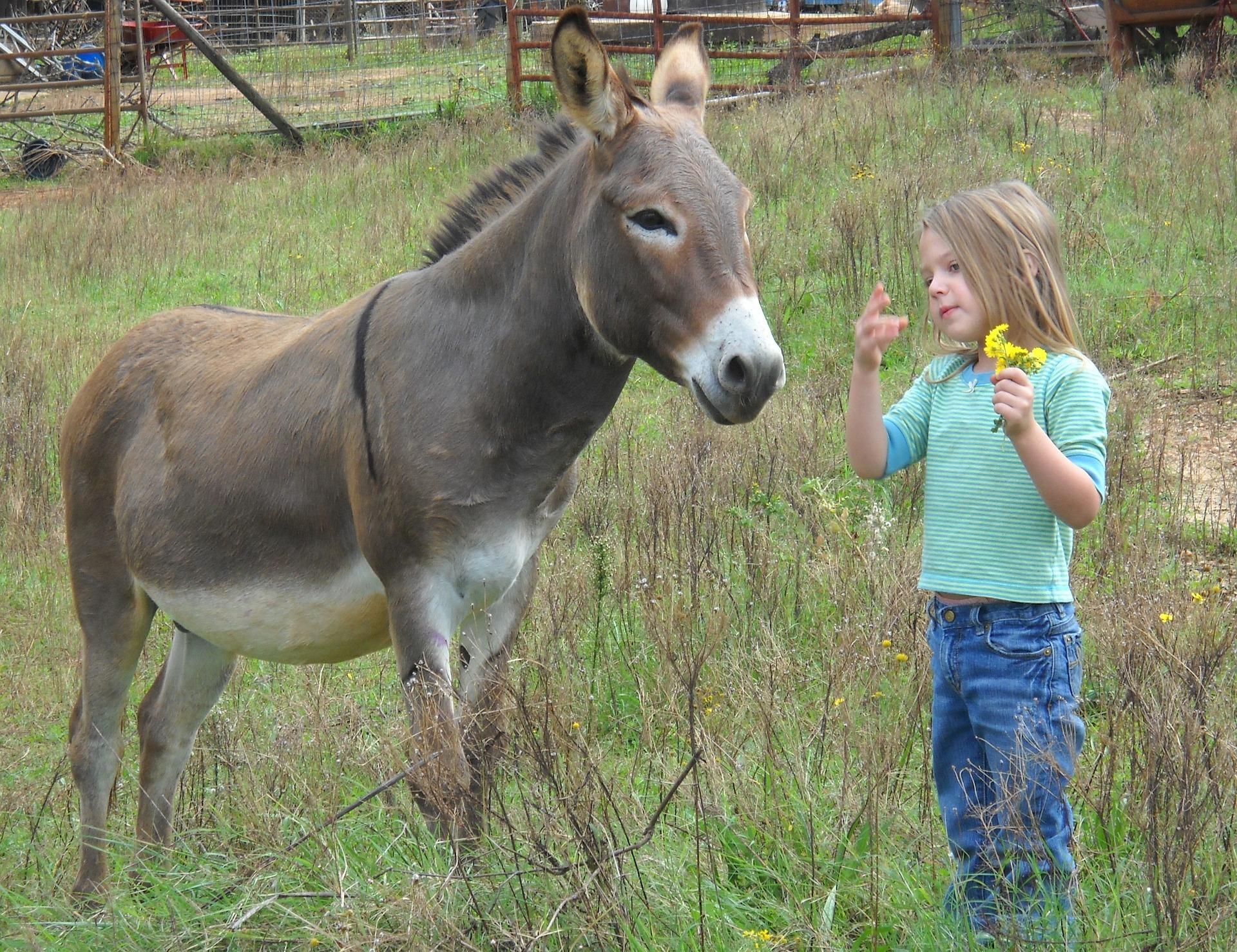 donkey-1621091_1920