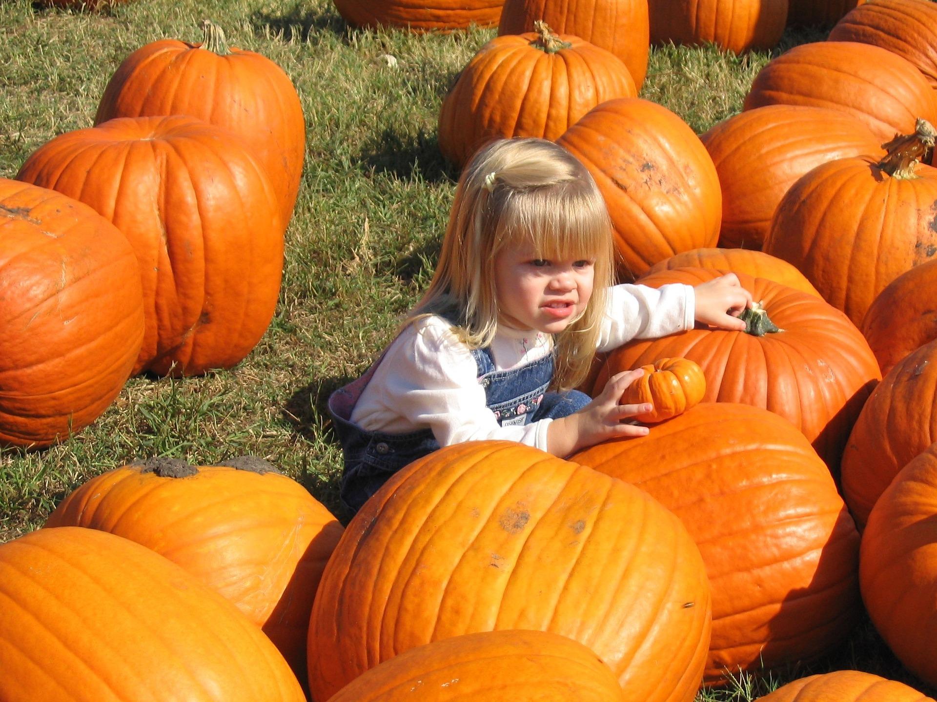 pumpkin-771388_1920