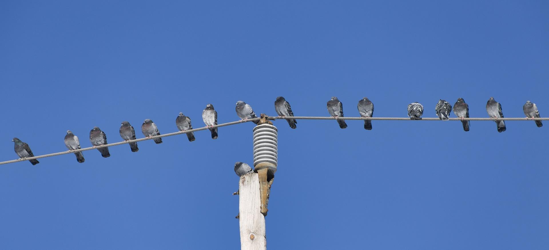 birds-1162384_1920