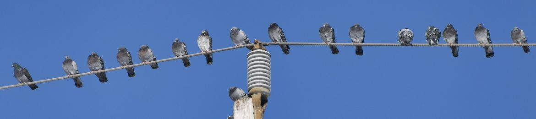 cropped-birds-1162384_1920.jpg